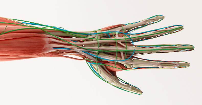 Carpal Tunnel Syndrome Treatment Options in Spokane